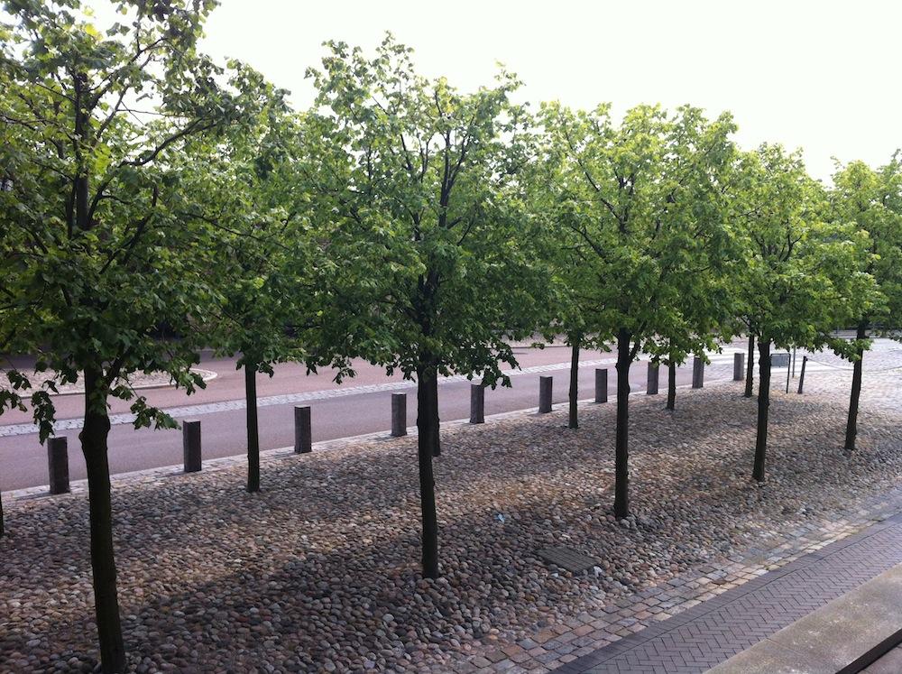 Træerne på Langelinie Allé